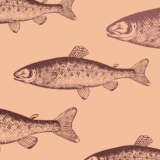 和食の定番の「鮭」名前が違うだけ??「白鮭・紅鮭・銀鮭」栄養やカロりーの違いを徹底比較してみた!